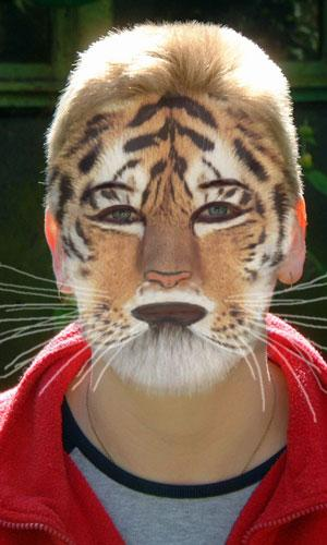 Tiger Kat