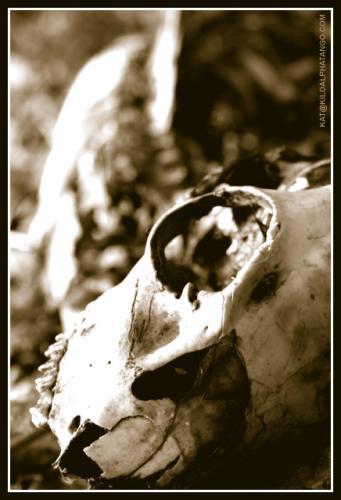 Animal Skull: An animal skull and accompanying spine and ribs.