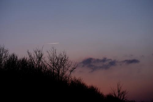 Contrail at Dusk: A contrail highlighted by the setting sun against a foreground of trees.