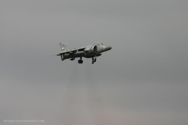 Hovering Harrier