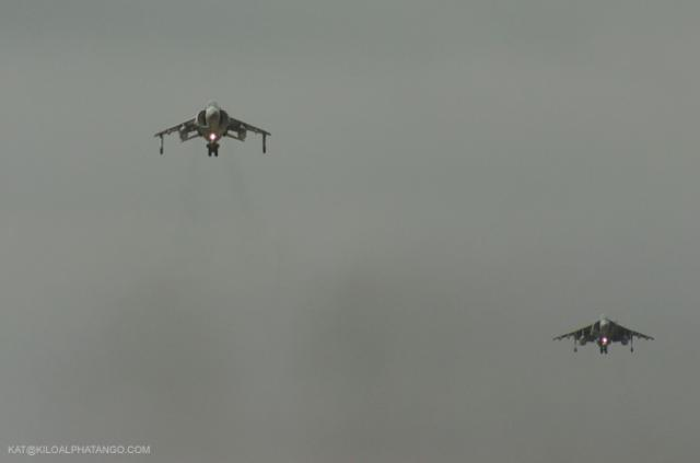 Hovering Harriers