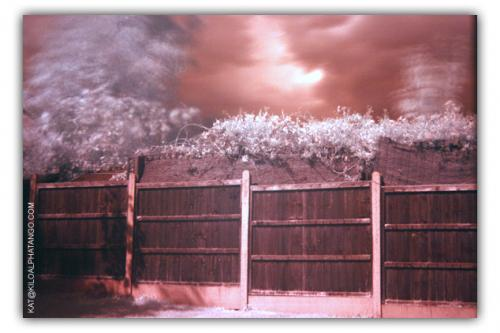 Garden Fence: First try with Infrared Filter