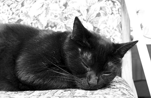 Bill Snoozing: Bill snoozing on the chair.