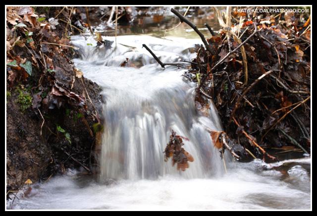 Leafy Waterfall