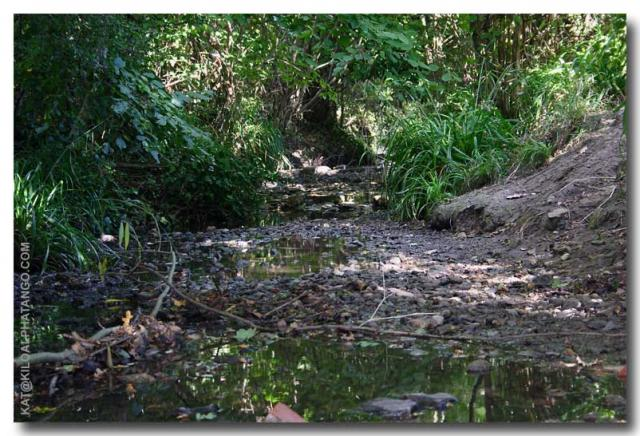 Patchway Brook